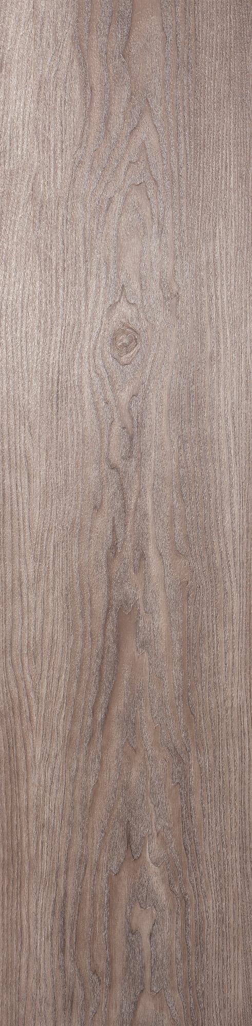 Chêne pédonculé blanchi