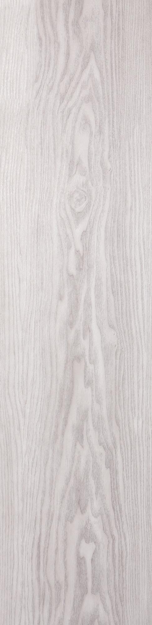 Chêne pédonculé blanc